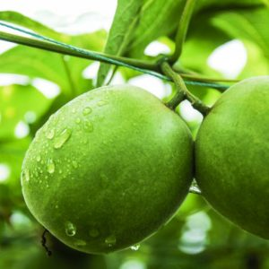 EkoSweet™ Monkfruit sweetener
